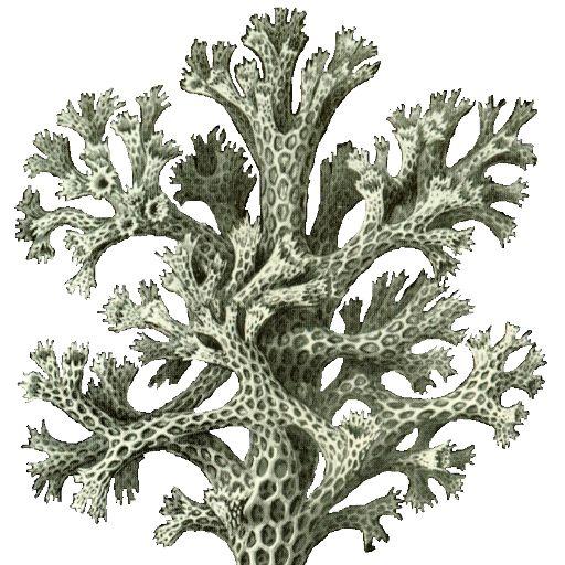 Phylum Fungi